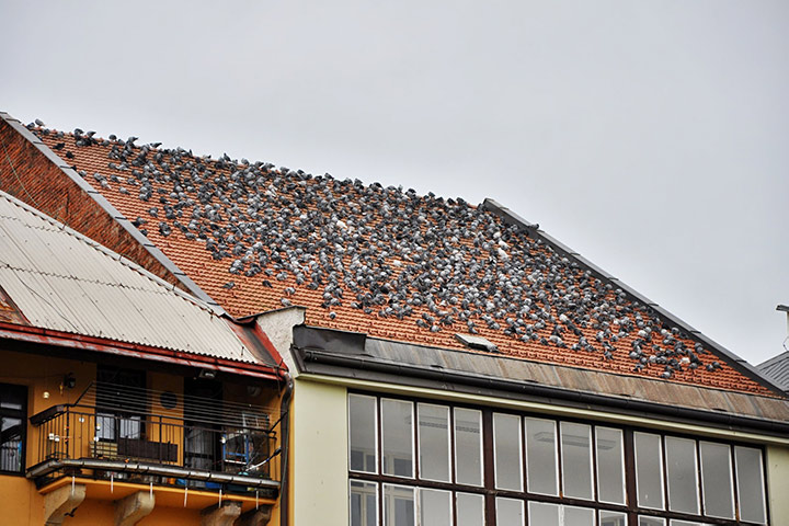 A2B Pest Control are able to install spikes to deter birds from roofs in Mill Hill.