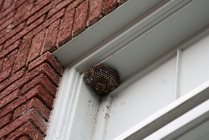 We provide a wasp nest removal service for domestic and commercial properties in Mill Hill.
